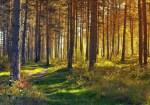 Westerwald-Natur